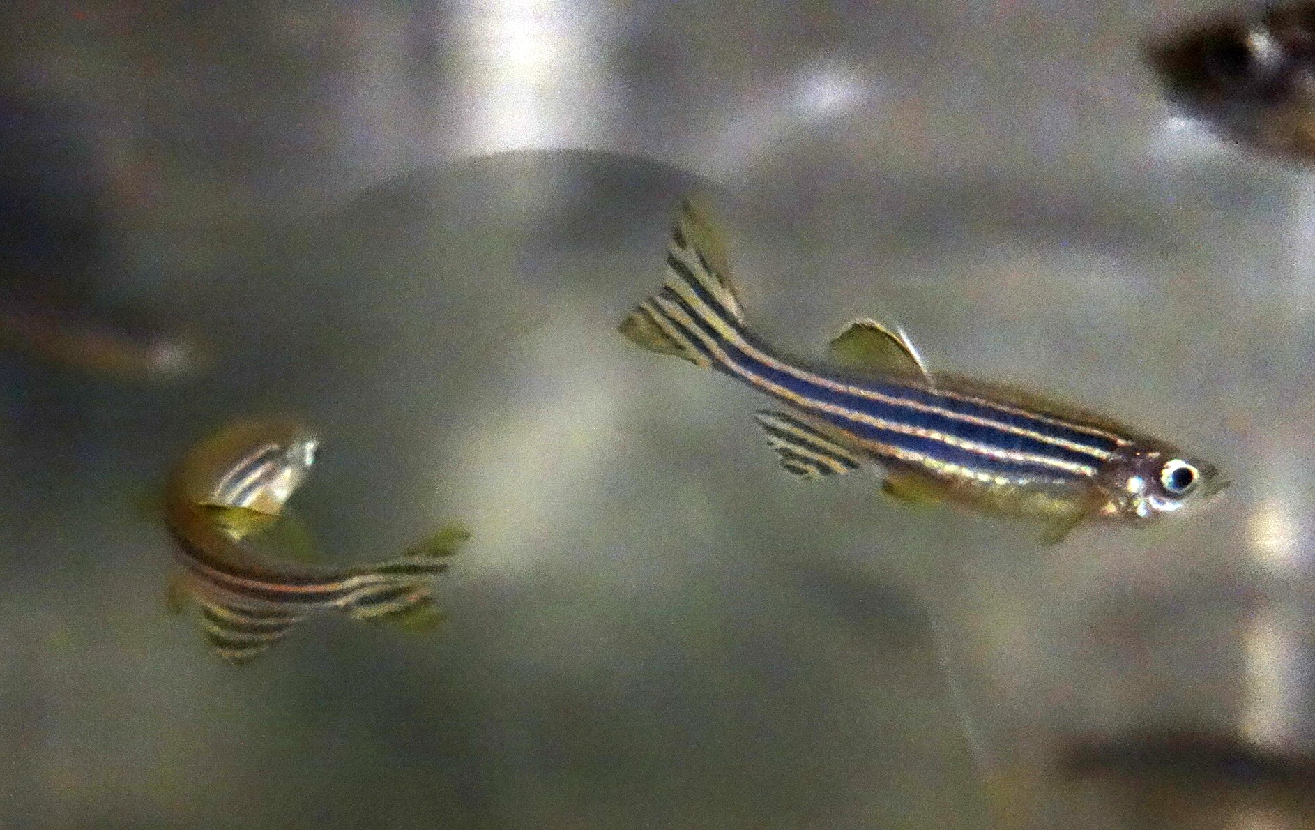 DSC01627 Two fish